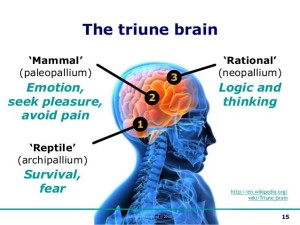 Attraction and the brain pua picture